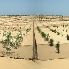 The Project for Afforestation in the Coastal Zone in the Republic of Senegal