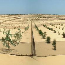 セネガル沿岸地域植林